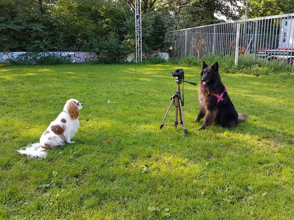 Bekijk hier onze DogStars!